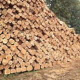 Tropical Wood  Logs For Sale - Teak Wood Logs Available