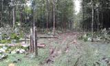 Woodlands - Reforested woodland for sale , 320 hectares