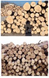Schnittholzstämme, Fichte  - Weißholz