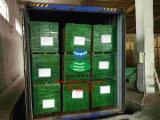 Veleprodaja Grede LVL - Pogledajte Ponude Za LVL - Radiata Pine, Eucalyptus, Radiata Pine