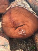 Wälder Und Rundholz Afrika - Schnittholzstämme, Pau Rosa