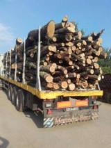 Hardwood  Logs For Sale Romania - -- mm Oak (European) Firewood in Romania