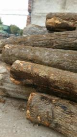 Hardwood  Logs Demands - Oak and ash logs importer
