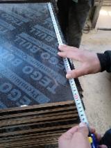 Plywood – Siyah Film Kaplı, Kavak, I214 Klonu