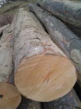 Beech  Hardwood Logs for sale. Wholesale exporters - Oak/beech logs