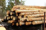 Softwood Logs for sale. Wholesale Softwood Logs exporters - Pine/spruce/larix logs