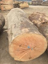 Schnittholzstämme, Oregon Pine, Douglas Fir