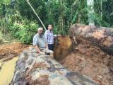 Tali  Tropical Logs - Tali logs