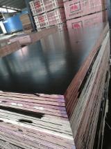 木皮和单板 - 覆膜胶合板(棕膜)