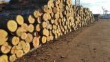 Latvia Hardwood Logs - Selling Birch Logs from Latvia, diameter 25+ cm