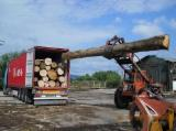 Hardwood Logs for sale. Wholesale Hardwood Logs exporters - 300 mm Beech (Europe) Saw Logs in Spain