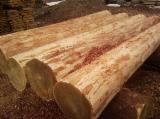 Grumes De Déroulage, Epicéa (Picea Abies) - Bois Blancs
