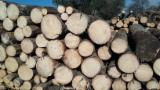 Softwood Logs for sale. Wholesale Softwood Logs exporters - Spruce (Picea Abies) - Whitewood 30+ mm A/B Saw Logs in Romania