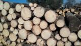 Find best timber supplies on Fordaq - SC ALDONA FOREST SRL - Spruce 30+ cm A/B/C Saw Logs Romania