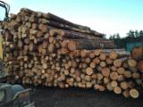 Softwood Logs for sale. Wholesale Softwood Logs exporters - Pine logs
