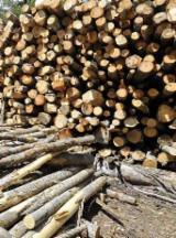 Firewood/Woodlogs Not Cleaved -- mm