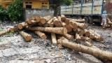 null - Teak logs for sale
