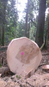 Fir (Abies alba, pectinata) de 18 à 60 cm a, b, c Saw Logs France