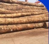 Hardwood Logs importers and buyers - Doussie Logs Inquiry