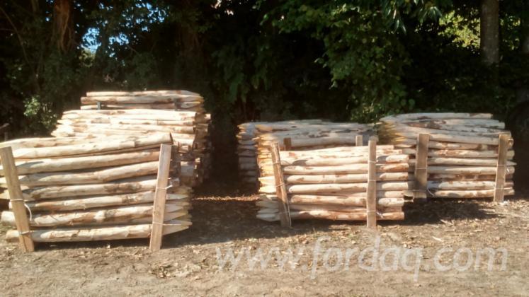 Vend piquets chataignier - Tuteur bois brico depot ...