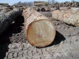 Hardwood  Logs Demands - Demand for North American white Oak wood