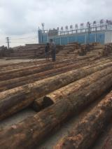 Softwood  Logs - larch logs need