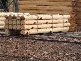 Konstruktionsrundholz Weichholz  Zu Verkaufen - Konstruktionsrundholz - Sibirische Lärche / Kiefer