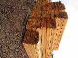 Siberian Larch sawn lumber KD