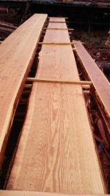 Unedged Softwood Timber - Siberian Larch