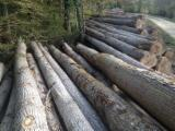 40+ cm Poplar Peeling Logs France