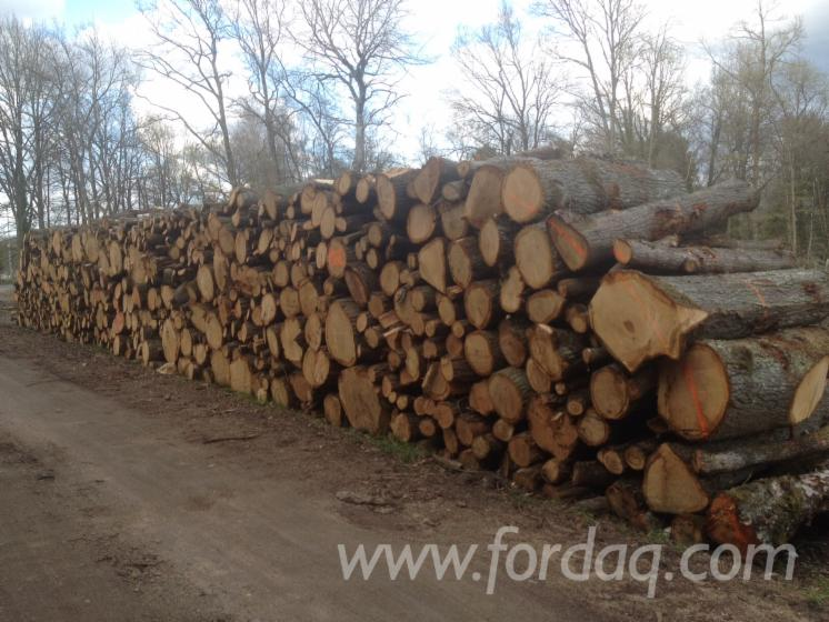 Wholesale Oak Firewood/Woodlogs Not Cleaved France