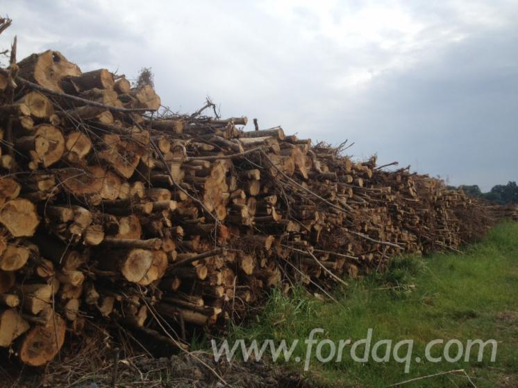Gewerblicher Handel Alle Holzarten Waldhackschnitzel Frankreich