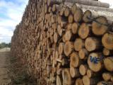 Schnittholzstämme, Pappel