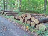 Germany Hardwood Logs - Oak saw logs B/C quality