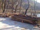 Laturoaie / Margini - vand lemn de foc, deseuri, laturoaie