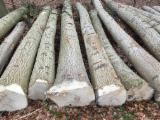 Hardwood  Logs Demands - Ash logs - brown and white request