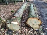 Oak logs A/B/C grade