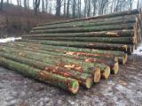 Schnittholzstämme, Fichte/Tanne