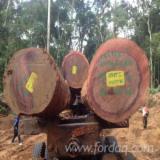 喀麦隆 - Fordaq 在线 市場 - 锯材级原木, 筒状非洲楝木