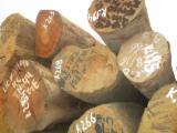 Tropical Wood  Logs - Sapelli logs offer