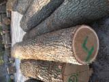 Hardwood  Logs Demands - 30cm + cm Oak (European) Saw Logs in Poland
