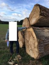 Hardwood  Logs For Sale - Poplar logs