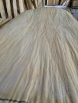木皮供应网络 - 批发硬木木皮和热带木木皮 - 桦木, 旋切