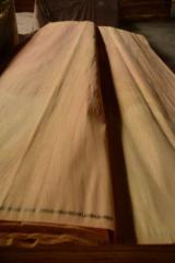 Veneer Supplies Network - Wholesale Hardwood Veneer And Exotic Veneer - Mersawa veneer, rotary cut mersawa veneer, mersawa plywood