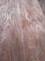 木皮供应网络 - 批发硬木木皮和热带木木皮 - 筒状非洲楝木, 旋切