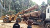 Sapelli  Sawn Timber - Sapelli  Sawn Timber Gabon