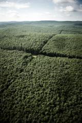 null - Macchine Di Movimentazione Forestale, Romania