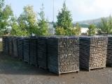 Hardwood  Sawn Timber - Lumber - Planed Timber - Oak Stave Woods  A Romania