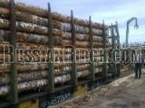 Hardwood  Logs - Birch veneer logs from Russia delivered to China