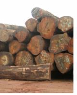 Tropical Wood  Logs - We need to import TALI LOGS